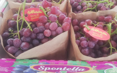 Spontella Fruits: season 2019 growth against the trend